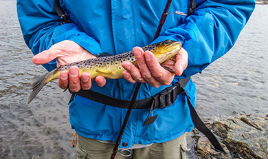 man holding a small brown trout